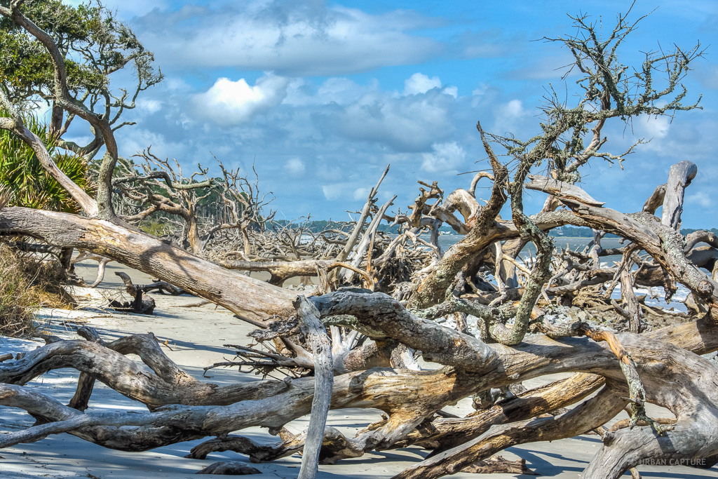 Jekyll Island (GA) United States  city photo : Jekyll Island Driftwood Beach, Georgia, United States « URBAN CAPTURE ...