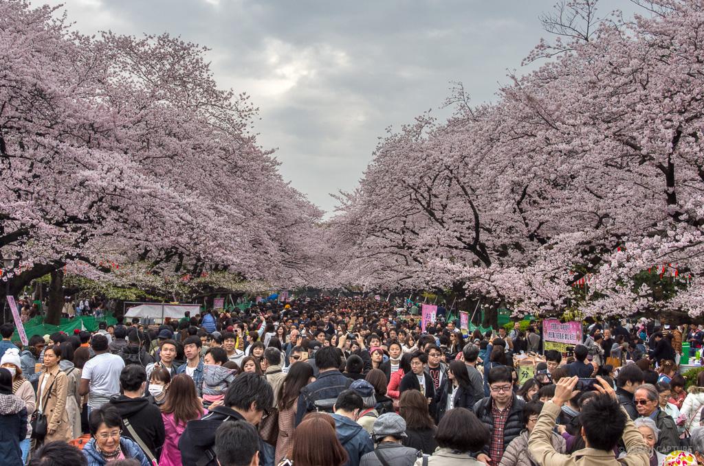 Ueno Park, Taito, Tokyo, Japan « URBAN CAPTURE  Travel & Photography