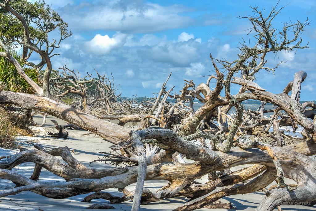 Jekyll Island Driftwood Beach Georgia United States