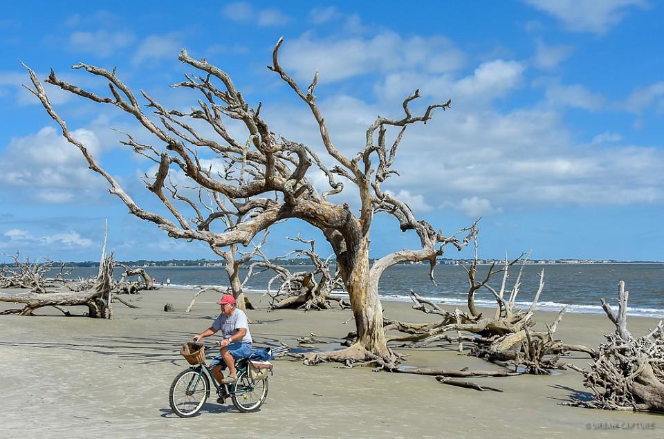 Jekyll Island Driftwood Beach Georgia